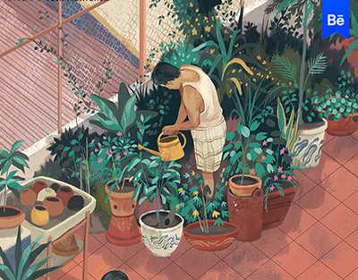 Как правильно выращивать каланхоэ?
