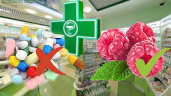 Малина вместо аспирина! Замороженная ягода признана лучшим «лекарством»