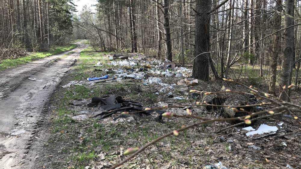 В лесу возле брянской дороги выросла свалка промышленных отходов