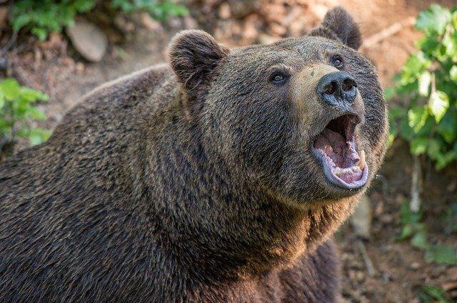 На Аляске обнаружили мужчину, несколько дней спасавшегося от медведя
