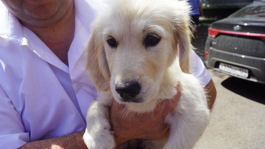 В Нижегородской области полицейские вернули мальчику похищенного щенка