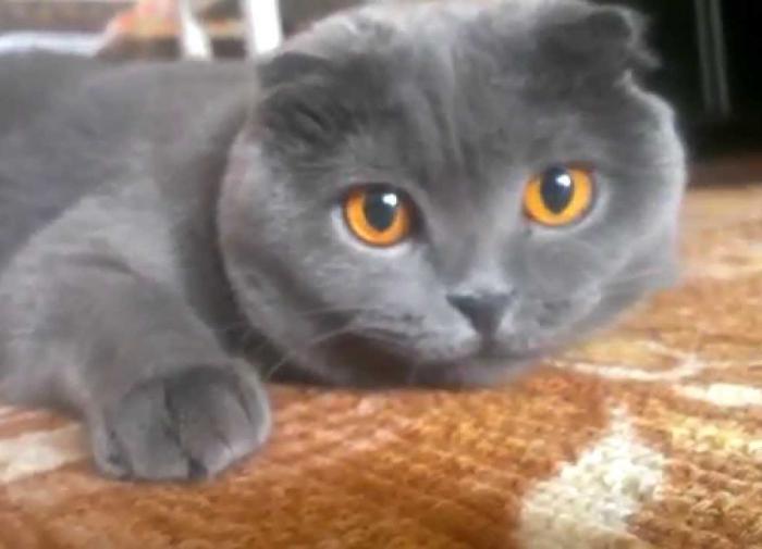 Кошек из котокафе держат ' в плену' из-за долгов владелицы