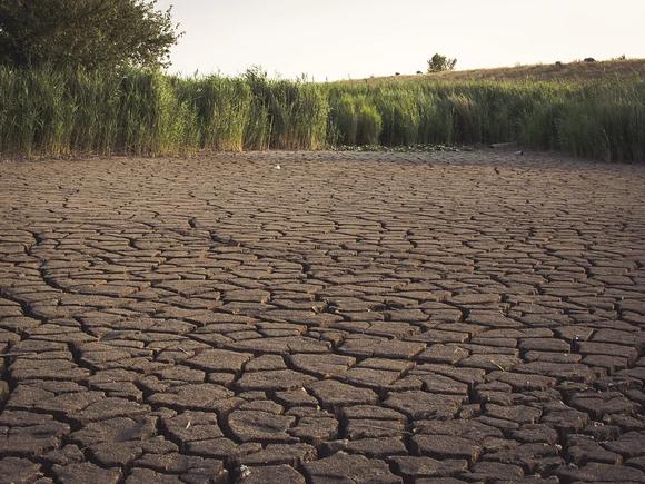 Оренбургской области угрожает засуха