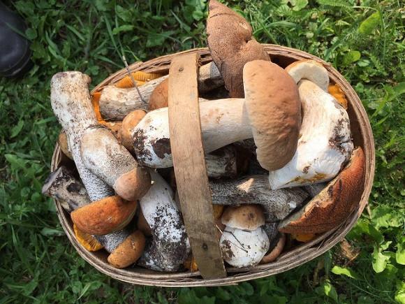 Россиянам ужесточили правила сбора грибов и березового сока