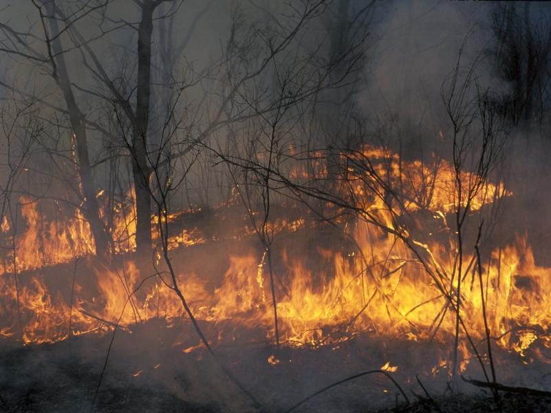 Размах лесных пожаров в Карелии увеличился в 2 раза менее чем за сутки