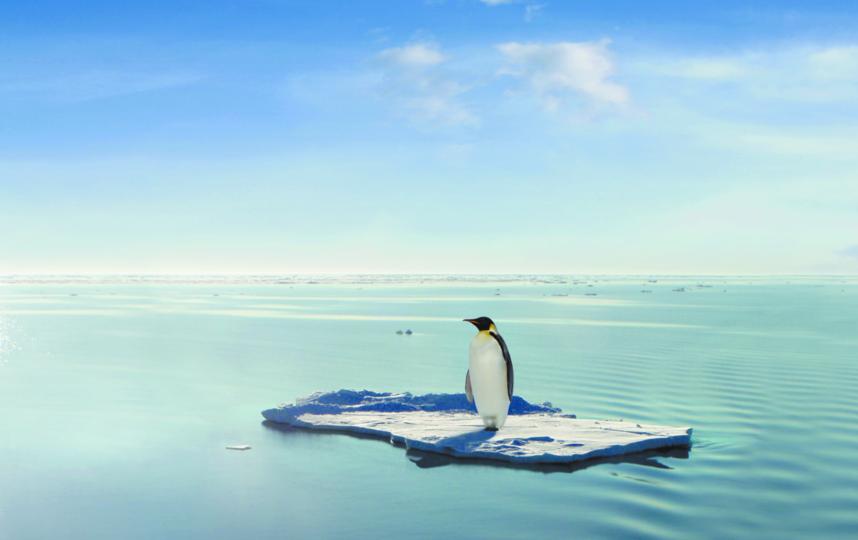 Императорских пингвинов не станет к 2100 году